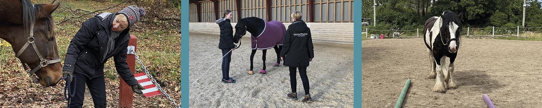 HorseMama undervisning