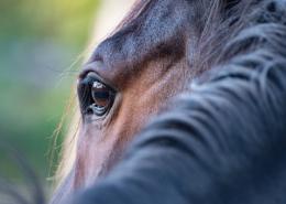 Når hesten bukker